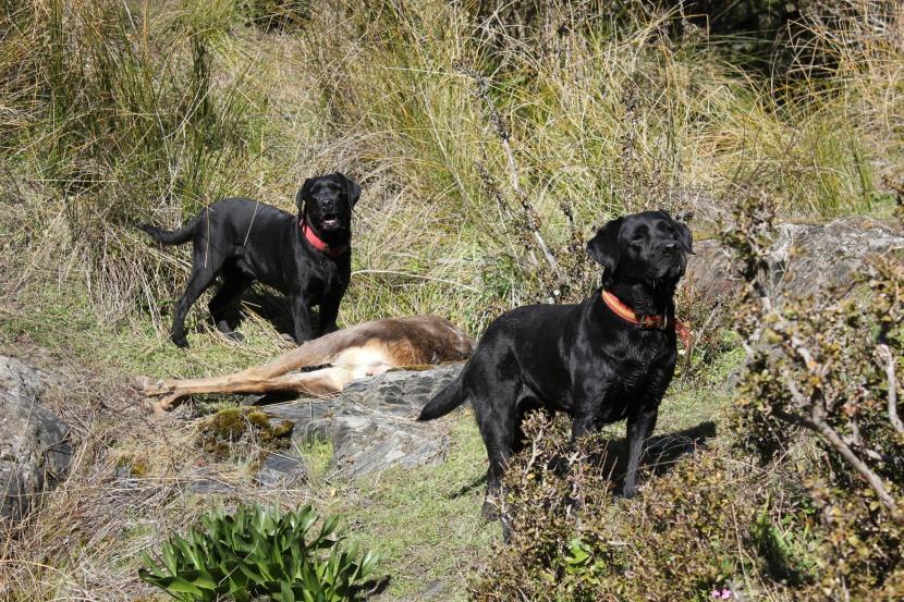 Nena y Cata de caza
