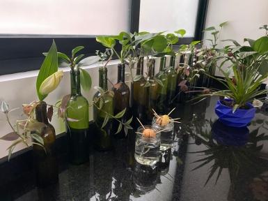 Criadero de plantas